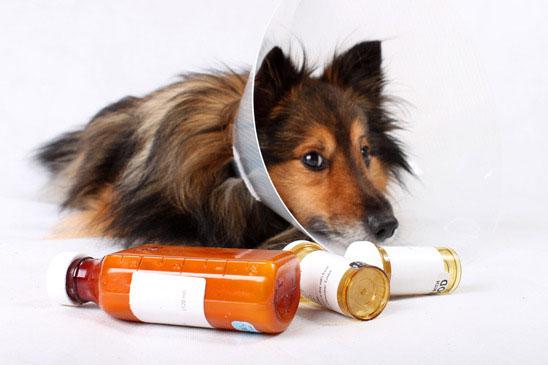 Preparazioni veterinarie